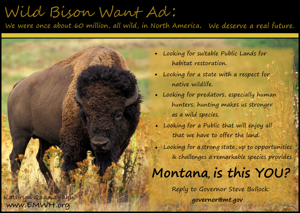 bison%20want%20ad.png